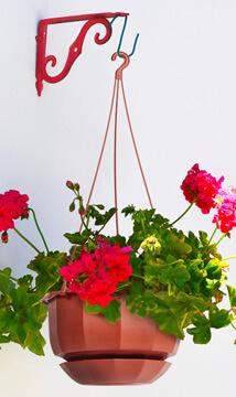 Jenis Tanaman Bunga Hias Untuk Rumah